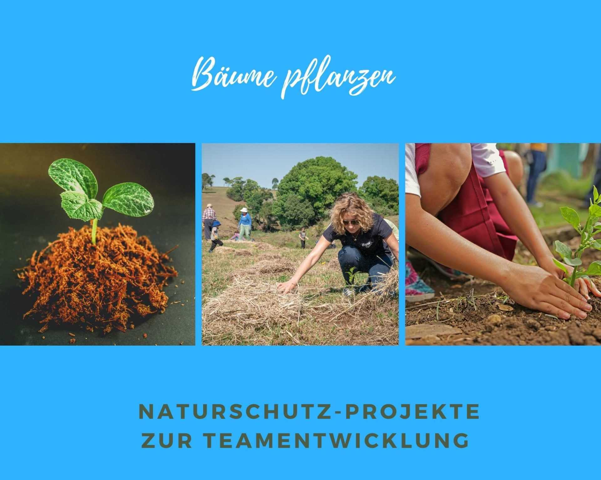 Green Event Bäume pflanzen