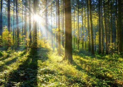 Bäume pflanzen als soziales Team Event