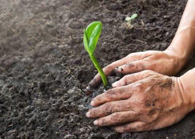 Bäume pflanzen als grünes Team Event