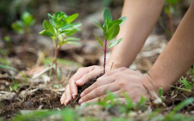 Corporate Social Responsibility (CSR) & Gesellschaftliches Engagement von Unternehmen