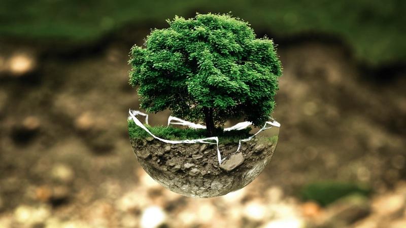 Das Thema Umwelt sollte bei Tätigkeiten der Social Responsibility im Unternehmen weit oben stehen.